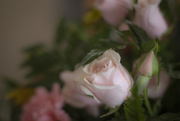 7th Mar 2021 - RosePink