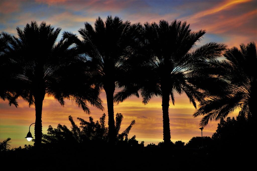 South Florida Sunset by chejja