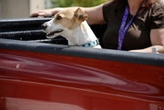 8th Mar 2021 - Dogs in cars