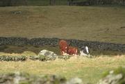 8th Mar 2021 - sunshine on cows