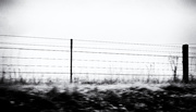 27th Feb 2021 - FoR Fence