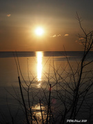 5th Mar 2021 - Sun Burst