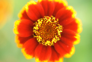 9th Mar 2021 - zinnia