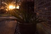 8th Mar 2021 - Sunset on Agave