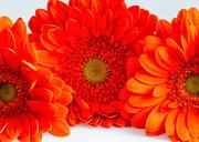 9th Mar 2021 - Rainbow orange - Week 2