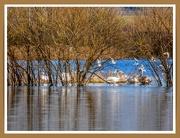 9th Mar 2021 - Lake View