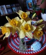 9th Mar 2021 - Daffodils