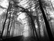 10th Mar 2021 - Spooky