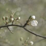 10th Mar 2021 - Blended blossom