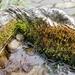 Birdbath Ecosystem
