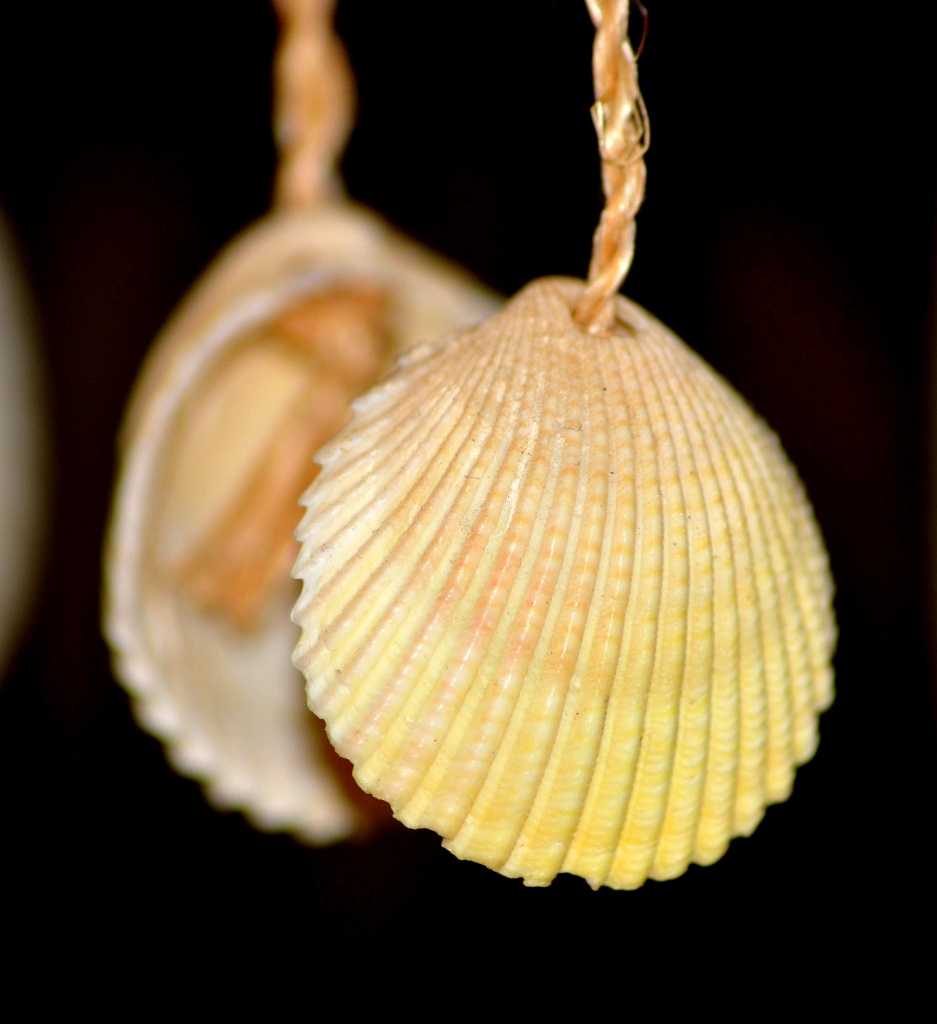 Seashell Reflection by stownsend