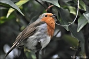 11th Mar 2021 - He sang me a little song before I gave him the suet pellets