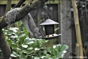 11th Mar 2021 - He's found the new feeder