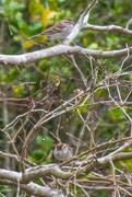 7th Mar 2021 - Hiding among the branches...