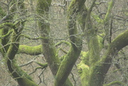 11th Mar 2021 - branching out