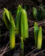11th Mar 2021 - A Sign That Spring is Coming