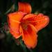 Rainbow colour orange