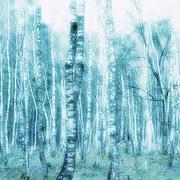 12th Mar 2021 -  Blue green