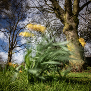11th Mar 2021 - Fluttering and dancing in the breeze