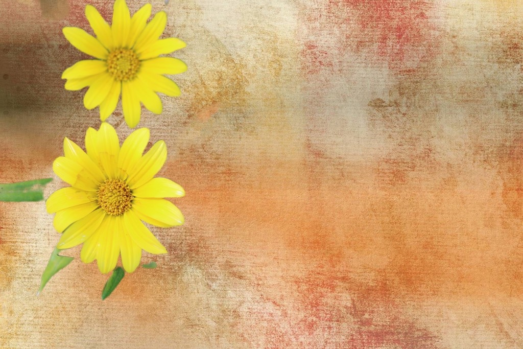 Yellow flowers  by kathyboyles