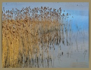 13th Mar 2021 - Grasses And Reflections