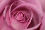14th Mar 2021 - Pretty in Pink