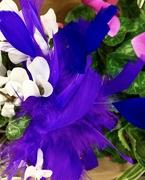 "13th Mar 2021 - A purple ""bird"""