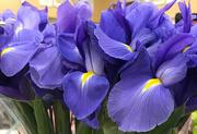 13th Mar 2021 - Purple flowers