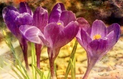 13th Mar 2021 - Spring  has sprung