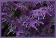 13th Mar 2021 - Purple 2 - Saturday