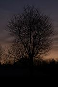 14th Mar 2021 - When morning gilds the sky