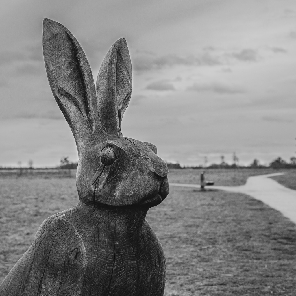 Hare under grey skies by gbeauchamp