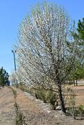 14th Mar 2021 - Church trees