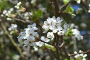 15th Mar 2021 - Spring morning