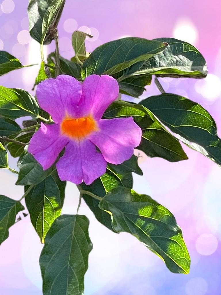Purple flower bokeh  by kathyboyles