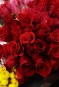 15th Mar 2021 - You can't go wrong with red roses