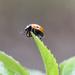 Ladybird. by tonygig