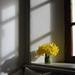 Daffodils by parisouailleurs