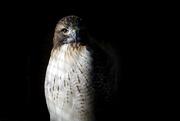 7th Feb 2021 - Bird