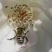 Nectar search by flyrobin