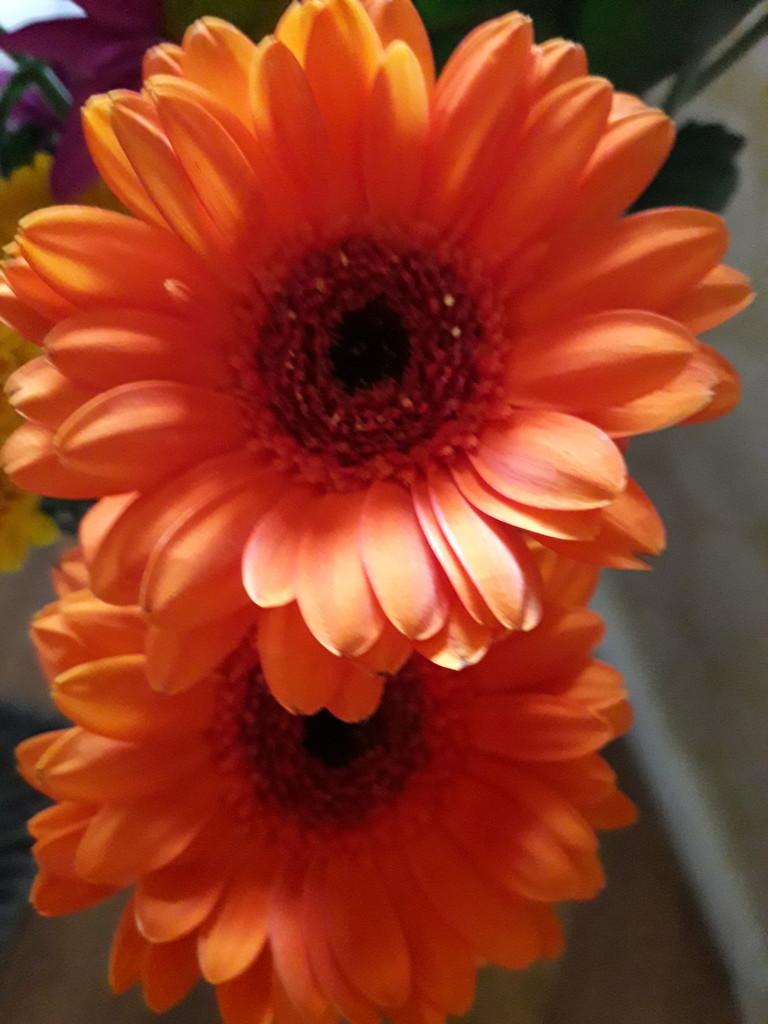 Orange Week 3 by mave