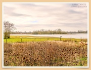 16th Mar 2021 - Summer Leys Nature Reserve