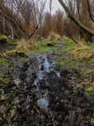 16th Mar 2021 - Muddy Track