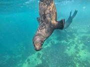 17th Mar 2021 - A Gopro underwater shot