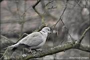 17th Mar 2021 - Grey on a grey day