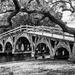 The Walking Bridge by photograndma
