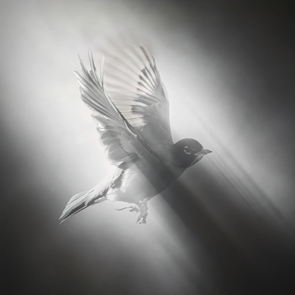 A Robin Takeoff by mikegifford