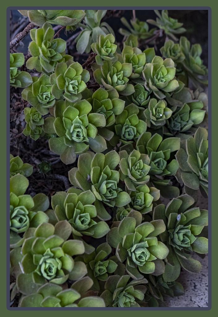 Green 3 - Thursday by mrslaloggie