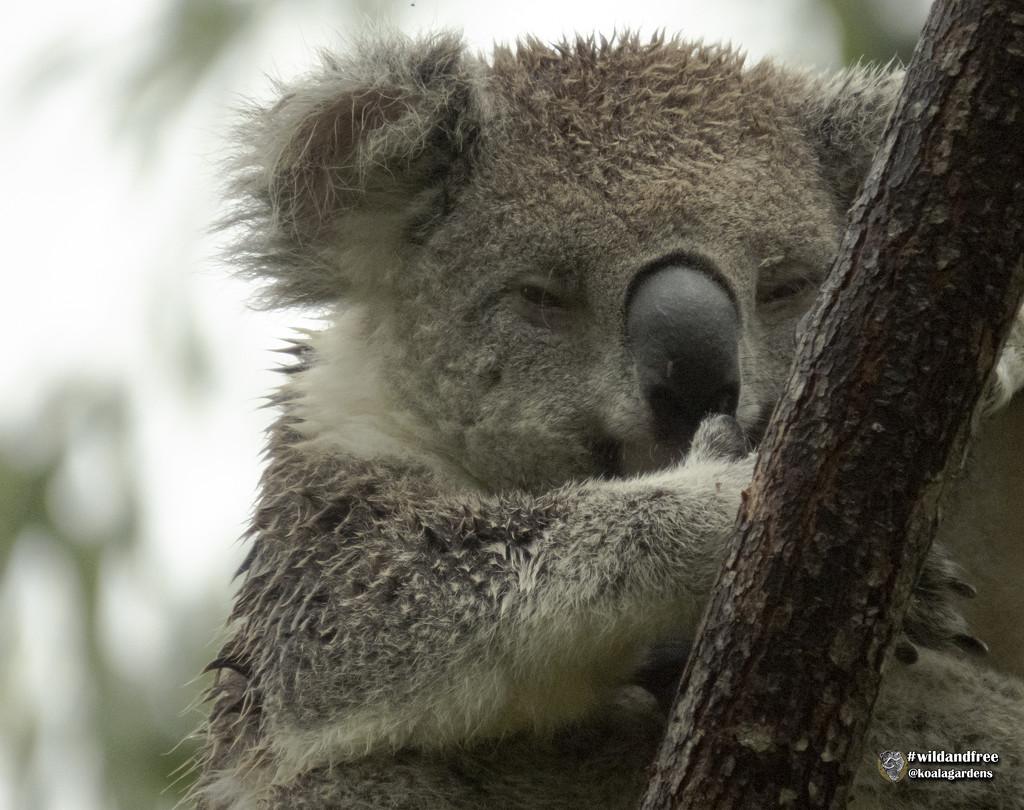 Matilda loves the rain by koalagardens