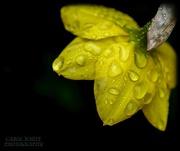 19th Mar 2021 - Rainy Morning